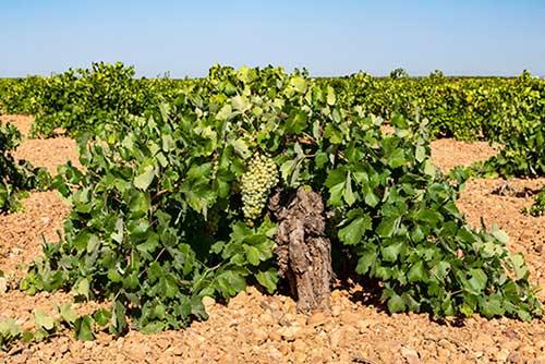 Tecnovino vinos de viñedos viejos congreso Old Vine Bodegas Verum