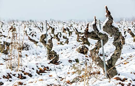 Tecnovino vinos de viñedos viejos congreso Old Vine