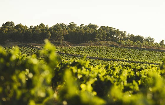 Tecnovino viticultura ecológica en DO Utiel-Requena