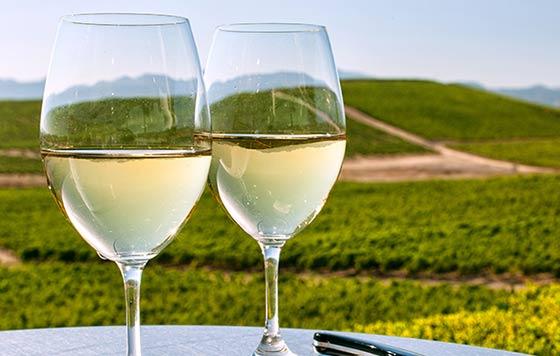 Tecnovino vinos blancos Condado de Huelva detalle
