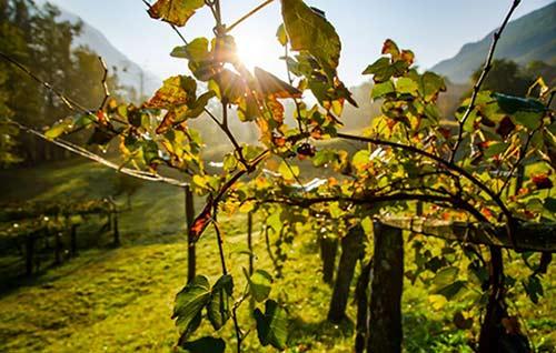 Tecnovino vinos de la España vaciada Vinissimus viñedo