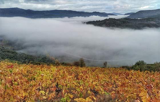Tecnovino Pago de los Abuelos viticultura heroica viñedo Borrunde detalle