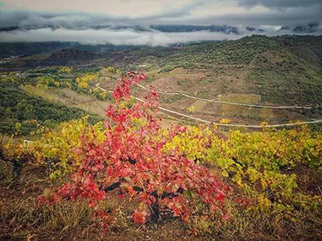 Tecnovino Pago de los Abuelos viticultura heroica viñedo Borrunde