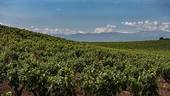 Tecnovino costes de producción de la uva Rioja