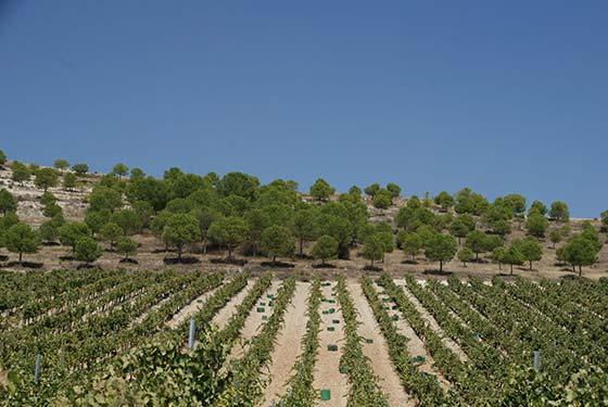 Tecnovino enfermedades fúngicas del viñedo Matarromera Viticast