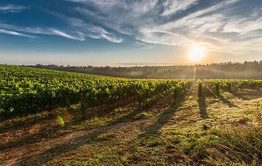 Tecnovino viñedo en España pago en el sector vitivinícola