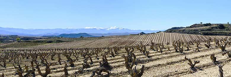 Tecnovino viñedos de Bodegas Orben