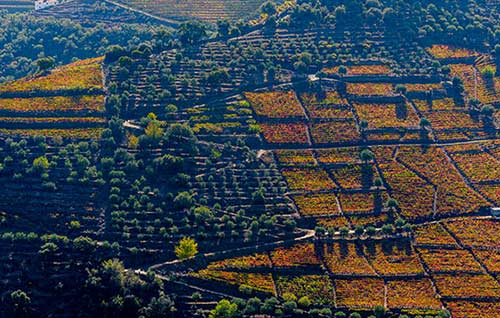 Tecnovino viticultura extrema Cervim Douro detalle