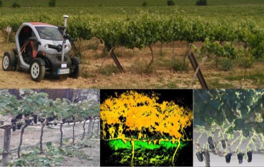 Tecnovino Terras Gauda robótica para optimizar la gestión del viñedo