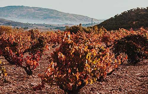 Tecnovino protección del viñedo DOP Alicante detalle