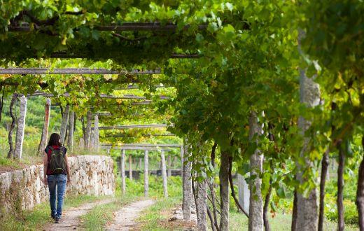 Tecnovino Rutas del Vino