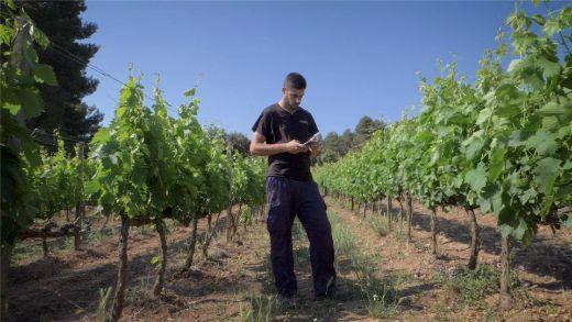 Tecnovino caso práctico Castell del Remei con Agroptima