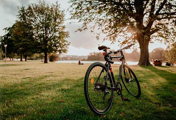 Tecnovino planes de enoturismo en familia OIVE bicicleta Unsplash