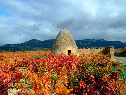 Tecnovino viñedos Bodegas Sonsierra
