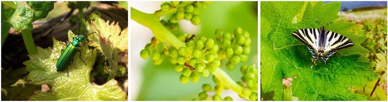 Tecnovino Bodegas Lan sostenibilidad biodiversidad