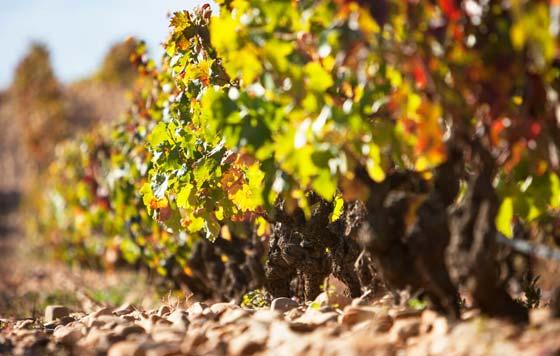 Tecnovino Bodegas Lan sostenibilidad viñedo detalle