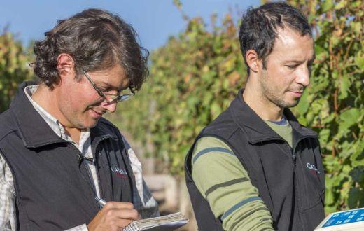 Tecnovino equipo investigación Catena Institute of Wine