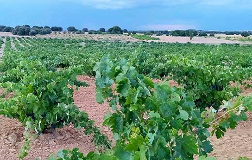 Tecnovino Ruta del Vino de Zamora viñedos