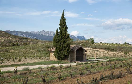 Tecnovino vino El Regalo Bodegas Izadi viñedo